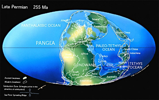 biology timeline of gondwana Eventually, gondwana would also separate into two halves about 180 million years ago, the land that would eventually form south america and africa split off from the rest of gondwana and began to move west.