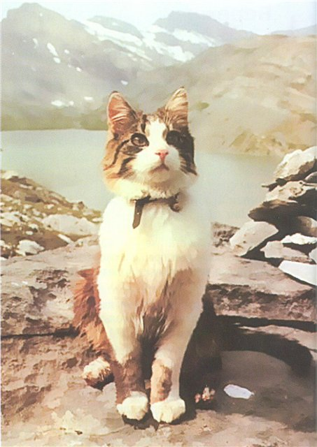 Альпинист кот