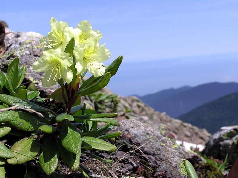 Немного летних цветов среди зимы. Путешествуя по Архызу... - Risk.ru