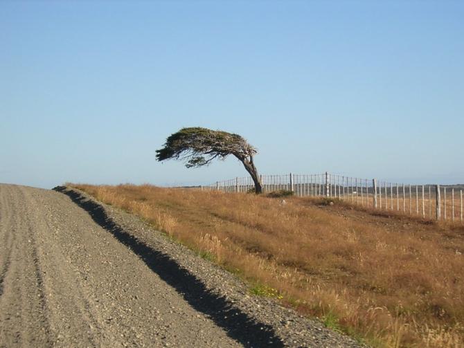 дерево5522pa2