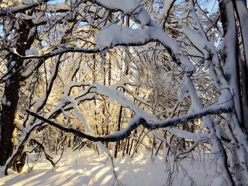 «Ступня России – 2017». 4 марта, Ромашково! (Снегоступинг, ступня россии, снегоступинг, tsl, фестиваль, ромашково)