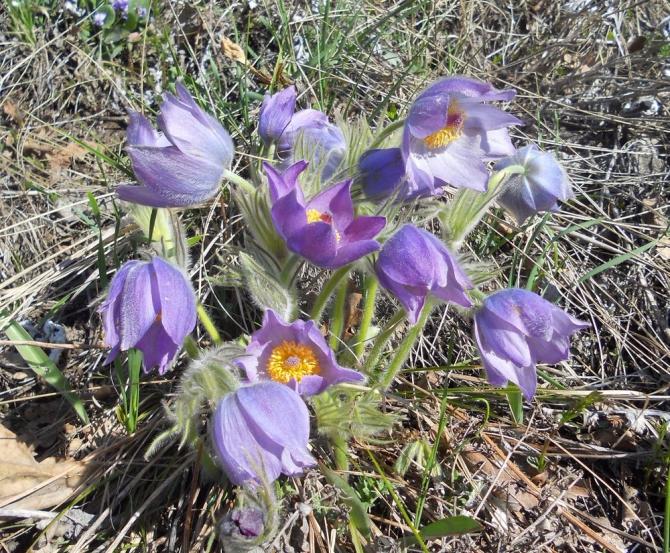 Урa, весна пришла! (Путешествия)