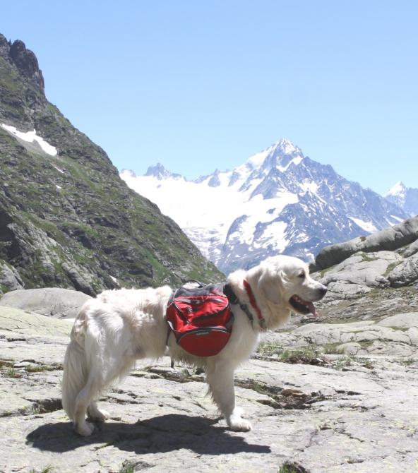 Пoeздкa в Шамони с собакой. (Горный туризм, трекинг, в горы с собакой, виа-феррата, франция)