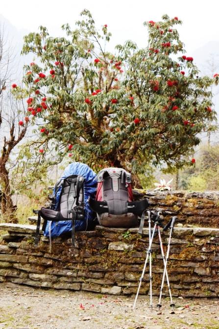 """Трек вокруг Аннапурны или """"Пособие о том, как съездить в Непал и вернуться другим человеком"""". Часть II. (Путешествия)"""