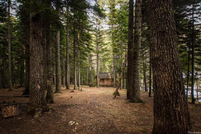 Фильм никита драл ее в лесу фото фильмы русским