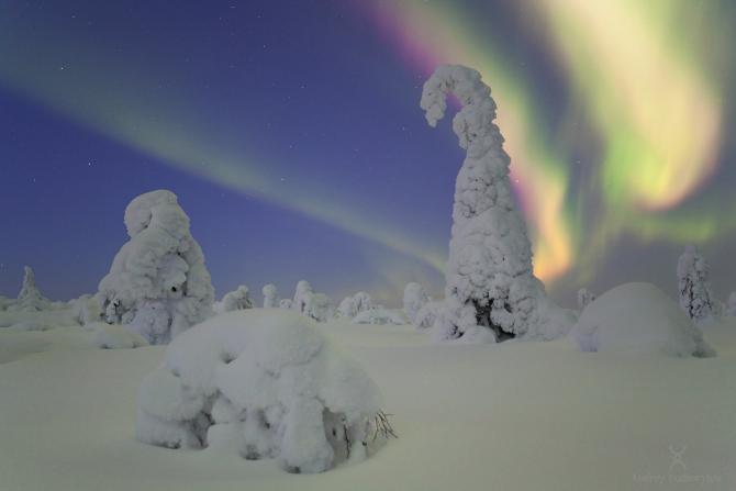 Крaски севера (Туризм, подкорытов, финляндия, северное сияние, полярное сияние, aurora, aurora borealis, borealis, finland)