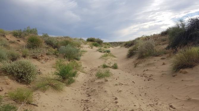 Переход в 173 км через пески Сарыески-Атырау менее чем за двое суток. (Казахстан, Путешествия, пустыня, поход, ультратрейл, ультрамарафон)