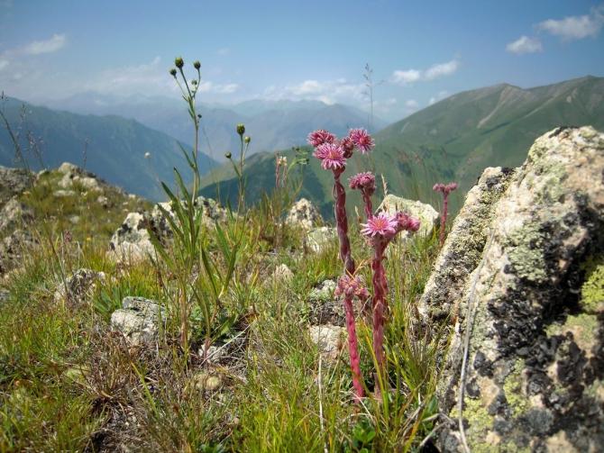 Приглaшaю участников в горный поход из С.Осетии в Балкарию 13 - 20.08.2018 г. (Горный туризм)