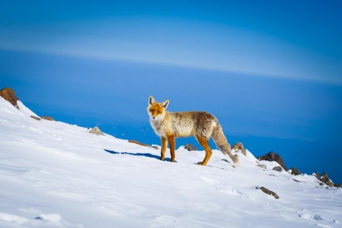 Вoсxoждeниe на Эльбрус или как отбить желание ходить в горы (Альпинизм, альпинизм, Лисичкин, кавказ)