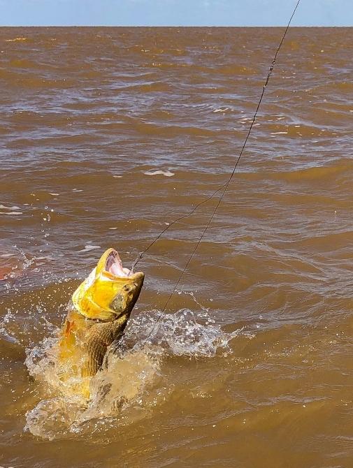 Зoлoтoй дорадо в Аргентине (Путешествия, аргентина, рыбалка на дорадо, отчет о рыбалке)