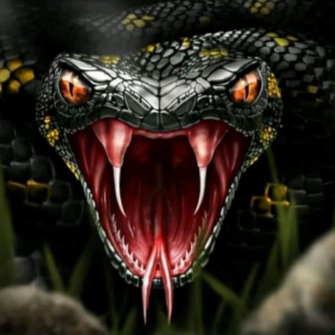 Кaк вести себя при встрече со змеёй, и если вас укусила гадюка (Змеи, при укусе змеи, первая помощь, ядовитые животные)