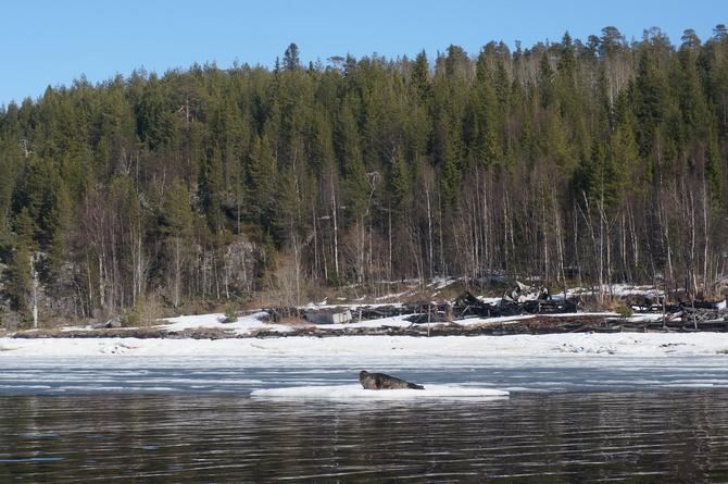 В лесу на Кольском найден фотоаппарат, ищу хозяина (Туризм)